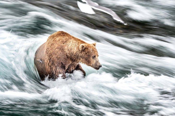 Aljaska klimatska kriza