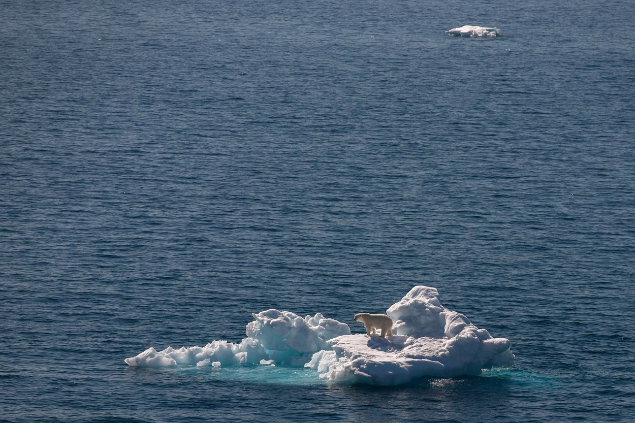 polarni medvedi