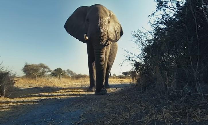 susret sa slonovima