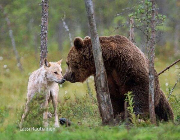 prijateljstvo vuka i medveda