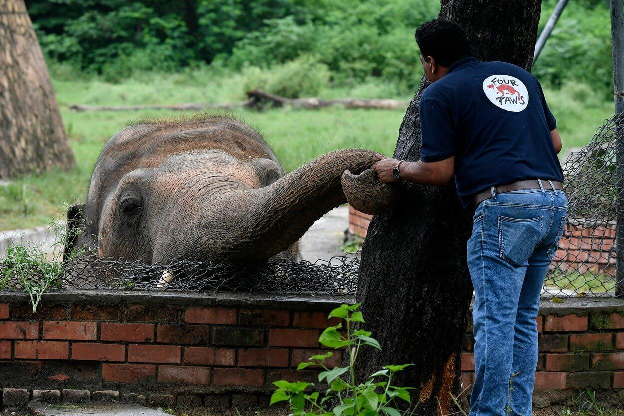 najusamljeniji slon na svetu