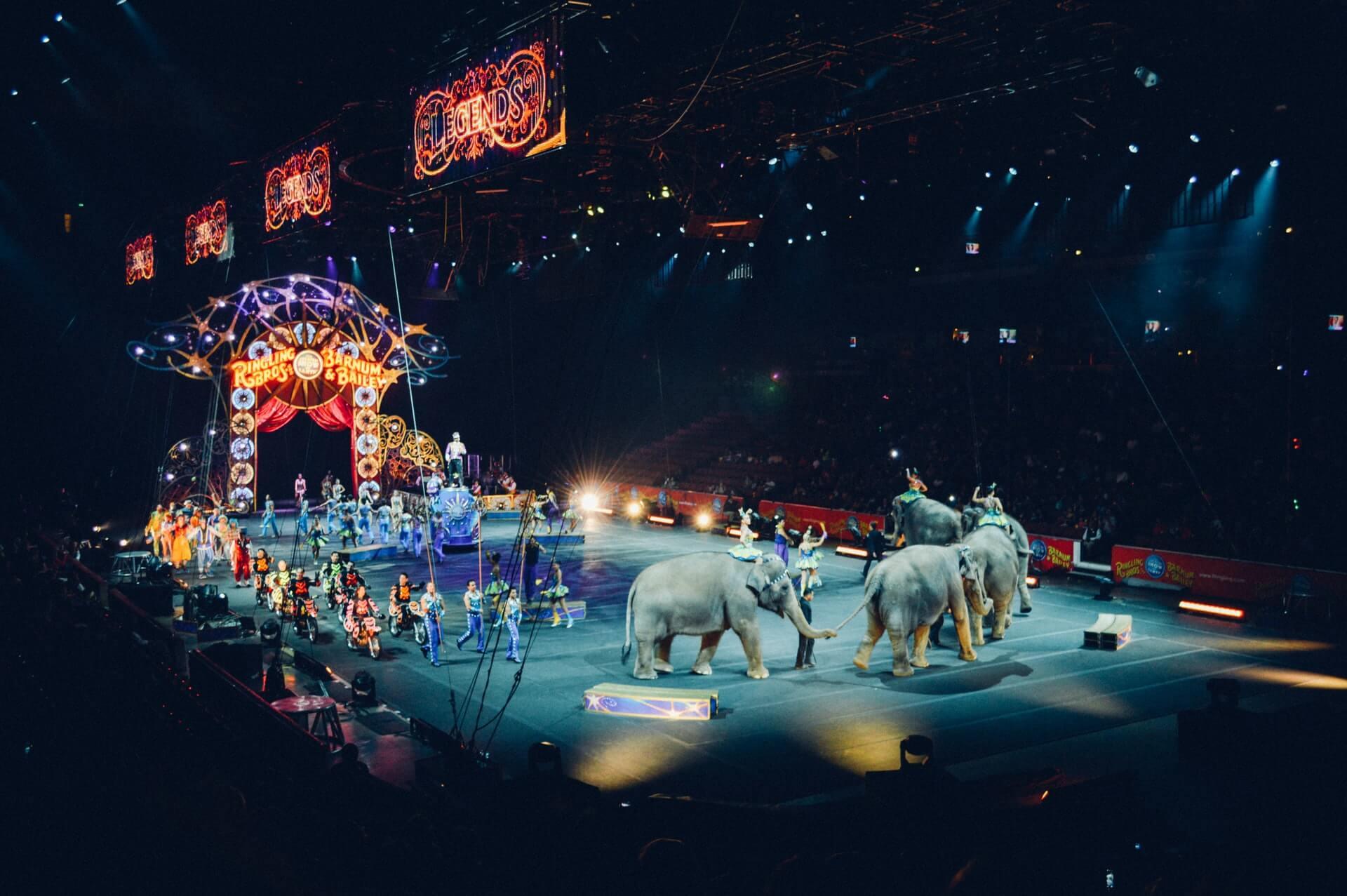 divlje životinje cirkus
