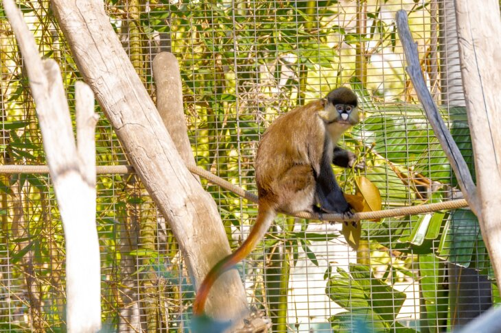 majmunima u zoo vrtu draza saobracajna buka