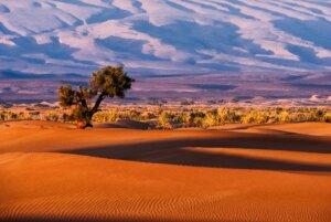 pošumljavanje pustinja