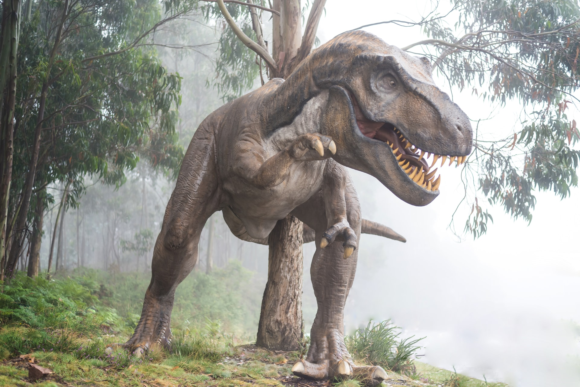dinosauruse