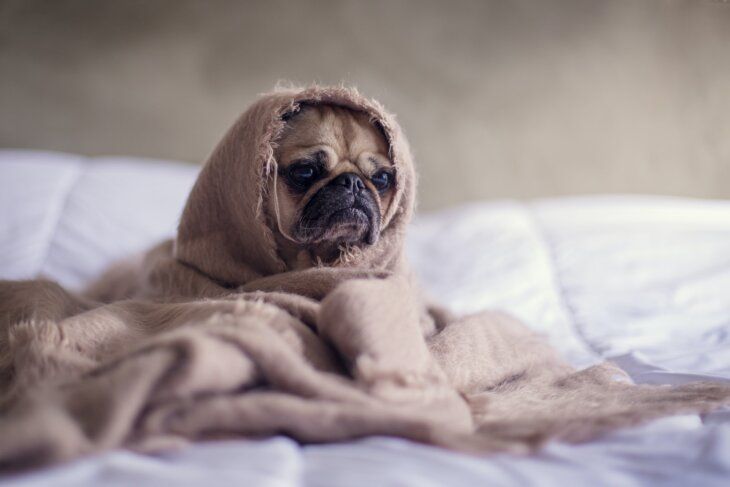 psi depresivni