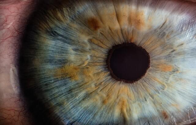 duša u oku
