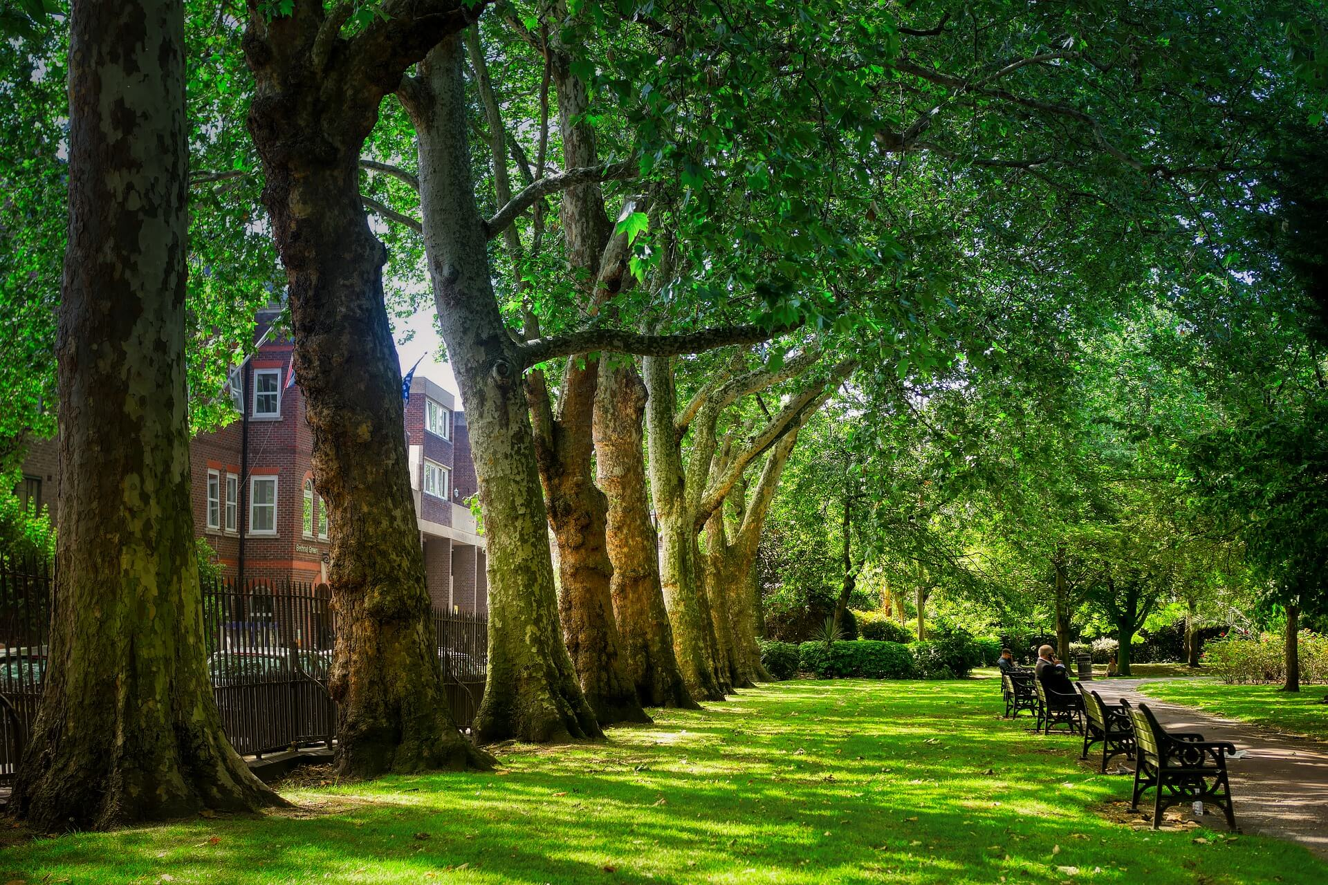 London drveće